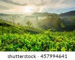 Sunrise Over Tea Plantations In ...