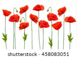 beautiful nature poppy... | Shutterstock .eps vector #458083051
