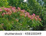This Is The Flowering Pink Sil...