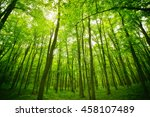 panoramic view of the forest... | Shutterstock . vector #458107489