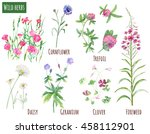 Collection Of Wild Herbs ...