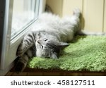 Funny Resting Cat In The...