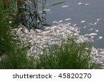 Dead Fish  Ecology   Fish Plague