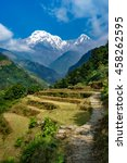 Terraced Fields With Annapurna...