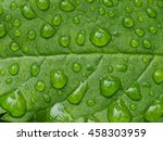 Raindrops On Green Leaf...