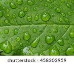 Raindrops On Green Leaf...