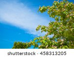 blossoming tree branches on... | Shutterstock . vector #458313205