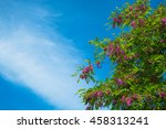 blossoming trees on blue sky... | Shutterstock . vector #458313241