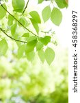 the fresh green  the outdoors ... | Shutterstock . vector #458368297