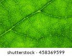 Close Up Of Natural Leaf...