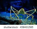 Small photo of Alaska crab in aquarium.