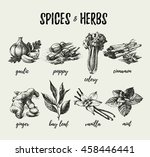 kitchen herbs and spices. hand... | Shutterstock .eps vector #458446441