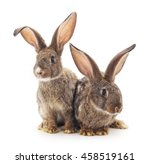 Stock photo brown baby rabbits on a white background 458519161