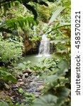Waterfall Hidden In The Lush...