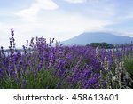 mt.fuji and lavender field at... | Shutterstock . vector #458613601
