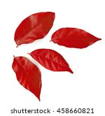 Autumn Red Leaves Isolated On...