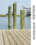 Seagulls On Pilings In Virginia
