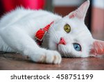 The Portrait Of White Thai Cat...