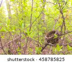 bird's nest in a tree. for the... | Shutterstock . vector #458785825