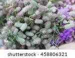 flowers     Shutterstock . vector #458806321