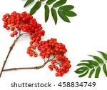Rowan Red  Berries On A Twig...