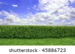 Green hedge with a beautiful blue sky and white clouds - stock photo