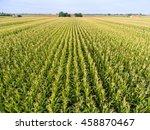 Top View Of Corn Field