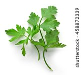 fresh green parsley leaves... | Shutterstock . vector #458872339
