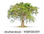 ficus tree on white background... | Shutterstock . vector #458930359