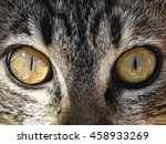 Cat Eyes Close Up Photo