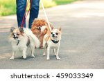 Stock photo woman walking dogs in park 459033349