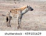 wildlife safari in africa of... | Shutterstock . vector #459101629