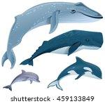 set marine mammals. blue whale  ...