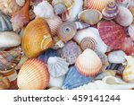 Mixed Colorful Sea Shells As...