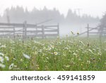 Morning Daisies With Fog At...