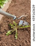 gardening hoe with weed on... | Shutterstock . vector #459163639