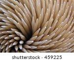 toothpick | Shutterstock . vector #459225
