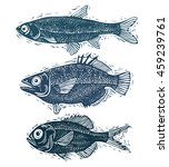 set of fishes  different... | Shutterstock . vector #459239761