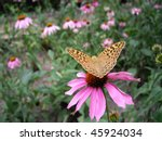 yellow butterfly on the flower... | Shutterstock . vector #45924034