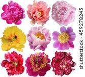 beautiful peony flowers set... | Shutterstock . vector #459278245