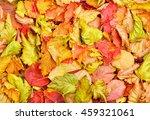 fallen autumn leaves background. | Shutterstock . vector #459321061