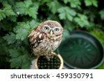 A Super Cute Owl In The Garden