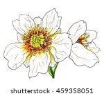 white anemone flower in blossom.... | Shutterstock . vector #459358051