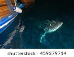 whale shark close up underwater ... | Shutterstock . vector #459379714