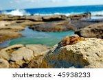 Small Crab On Stones In Malta