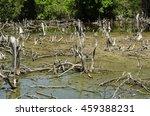 degraded mangrove forests  | Shutterstock . vector #459388231