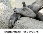 Gorilla Hand And Feet