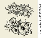 Stock vector flower hand drawn sketch bindweed tutsan hypericum vector illustration 459503269