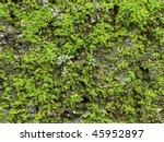 Mossy Lichen Macro