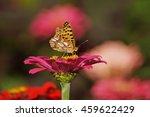 Butterfly Zinnia   Pink...